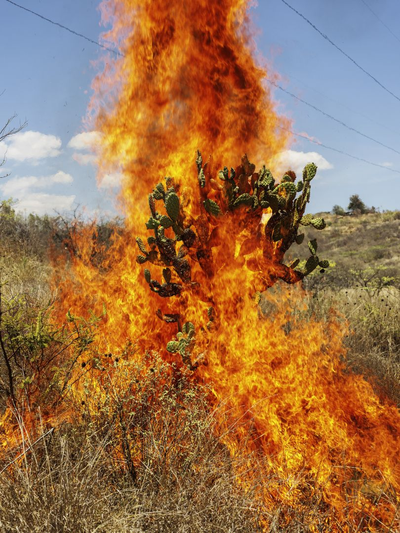Burning Bush, Oaxaca de Juárez, 2018 © Pieter Hugo courtesy Huxley Parlour Gallery