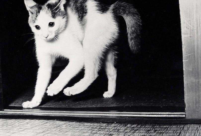 © Masahisa Fukase