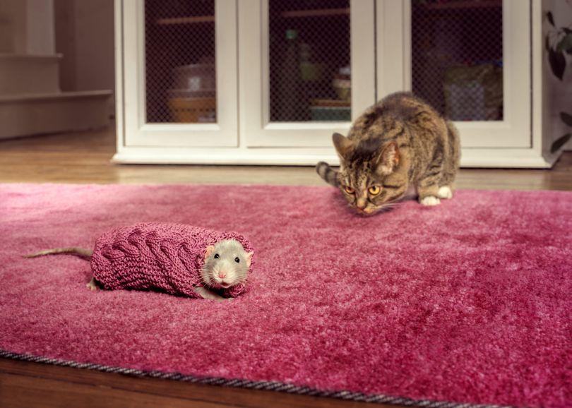 Knit Rat © Joseph Ford