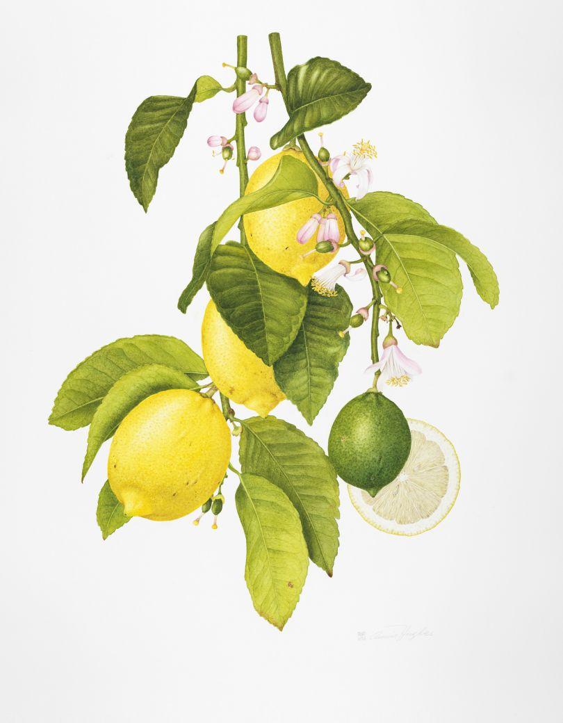 Image courtesy of RHS Botanical Art & Photography Show 2021