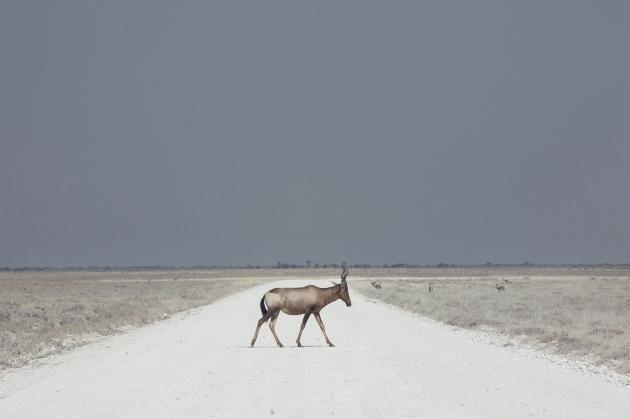 Landscape - Kevin Frayer, Winner Canada, 2016