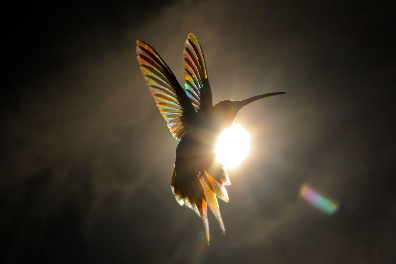 Solar © Christian Spencer