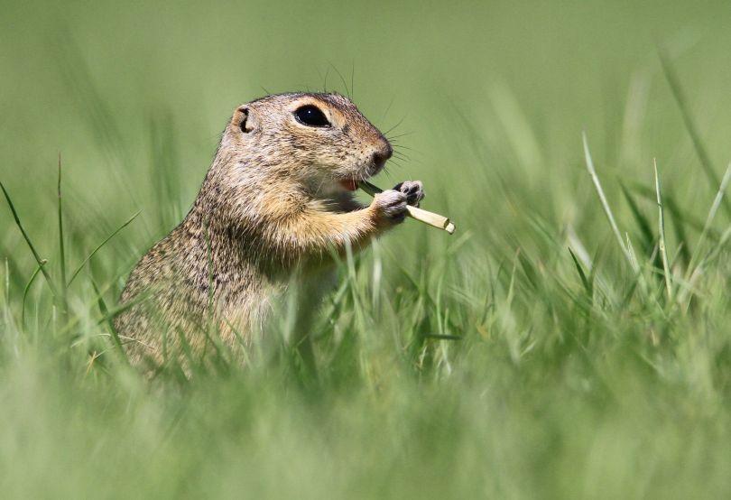 The Flautist © Roland Kranitz