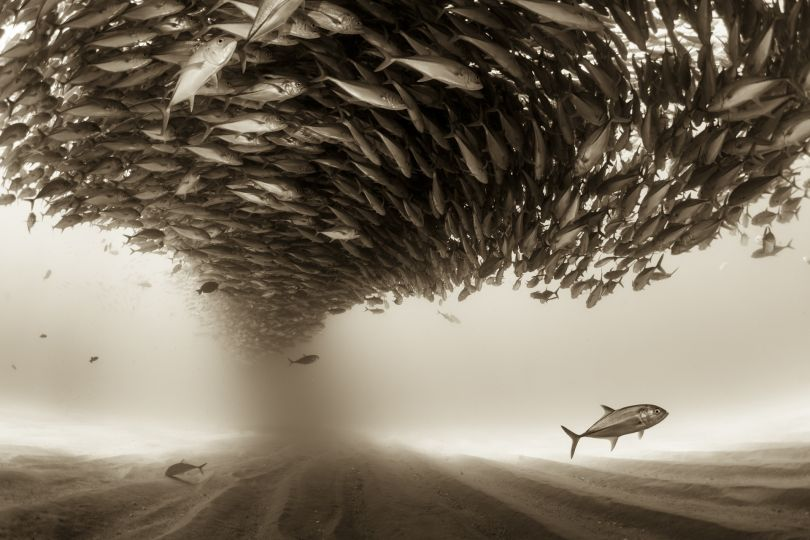 Mexico, Baja California, Sea of Cortez. A big school of Jacks forming a ceiling found at the protected marine area of Cabo Pulmo | © Christian Vizl, Mexico, Shortlist, Professional, Natural World, 2017 Sony World Photography Awards