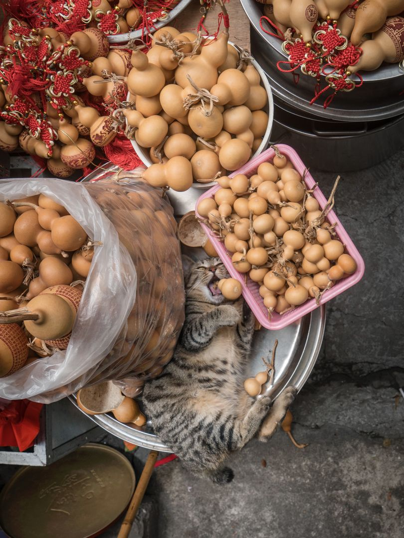 From the series, Shop Cats of China © Marcel Heijnen