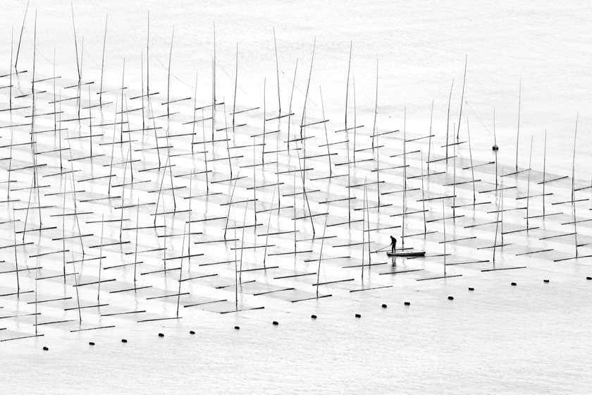 Farming the Sea - Tugo Cheng: A fisherman is farming the sea in between the bamboo rods constructed for aquaculture off the coast in southern China. (Open Travel)