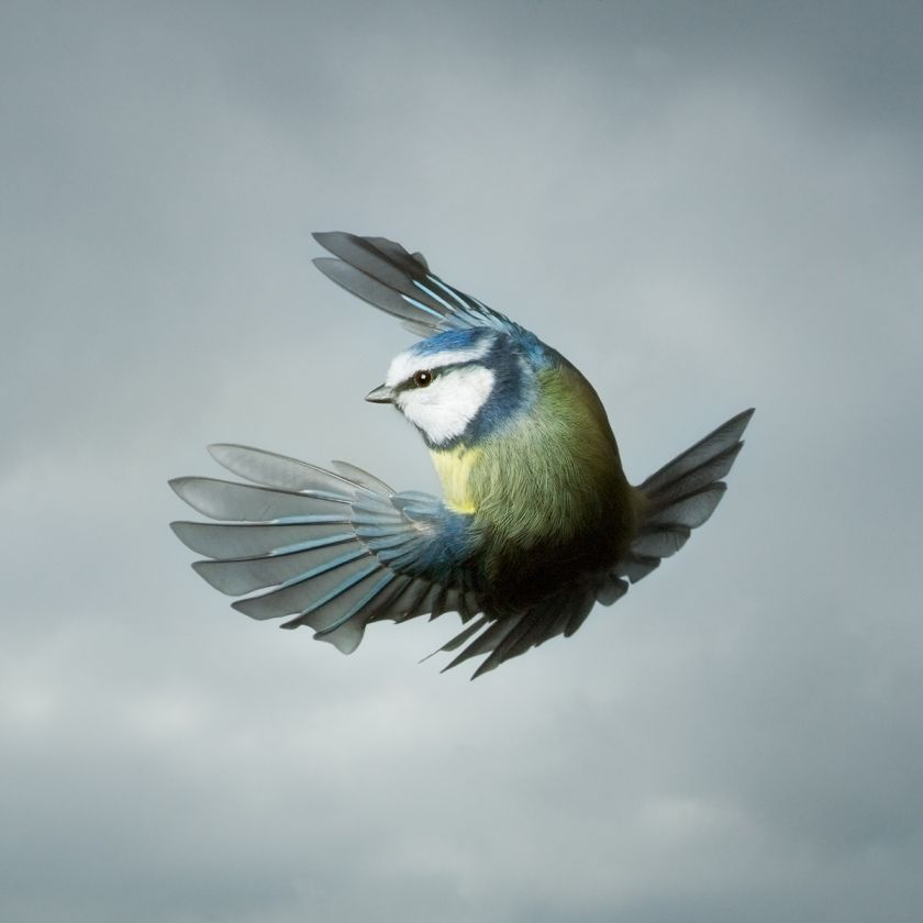 Blue Tit © Mark Harvey. All images courtesy of the photographer.