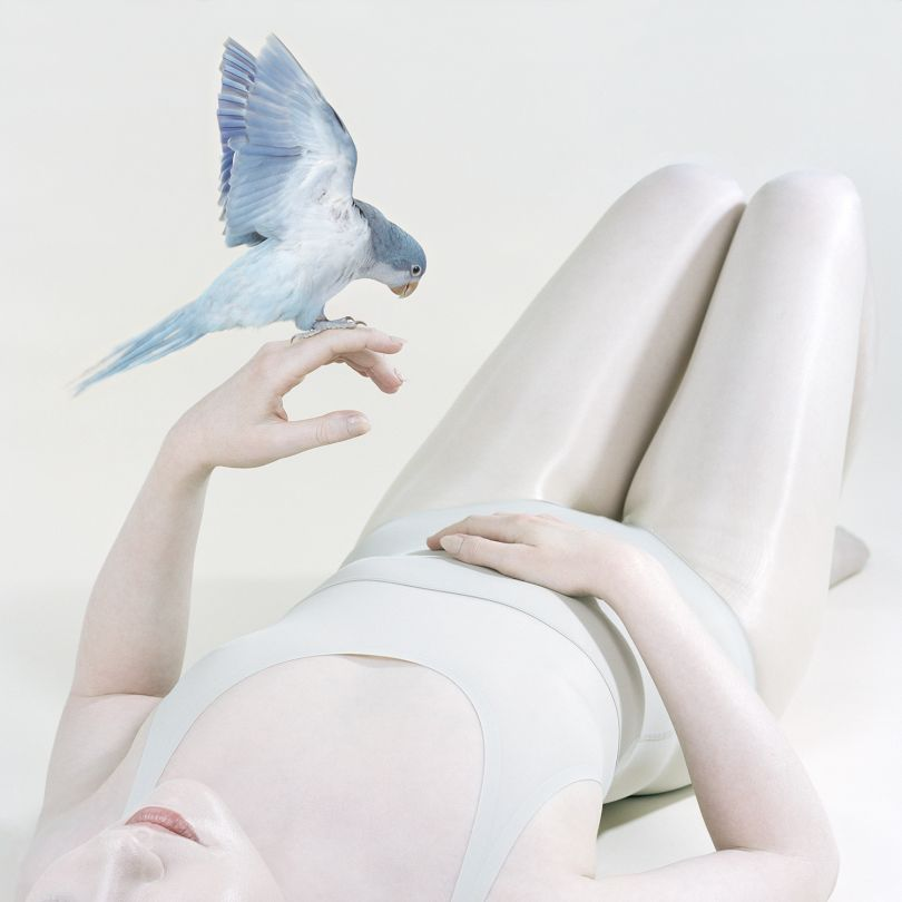Blue Bird, 2018 pigment print 100 x 100 cm edition of 8 + 2AP $6,000 unframed 120 x 120 cm edition 4 + 2AP $8,000 unframed. © Petrina Hicks