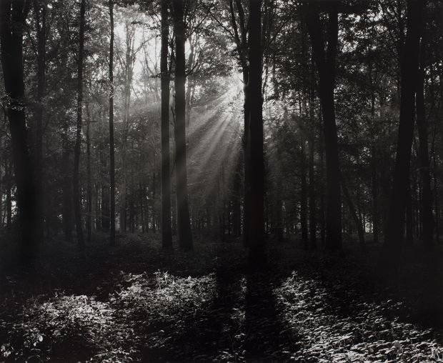 Delville Wood. © Peter Cattrell