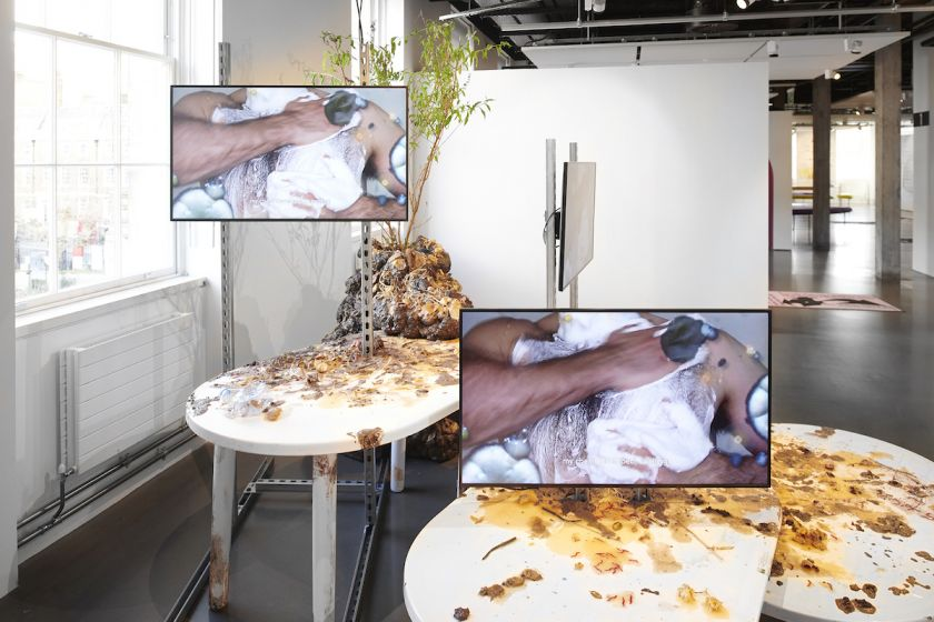 Adham Faramawy, Skin Flick (Invasive Species), installed as part of Genders, Science Gallery, London, Adham Faramawy, 2020. Photo Sylvain Deleu