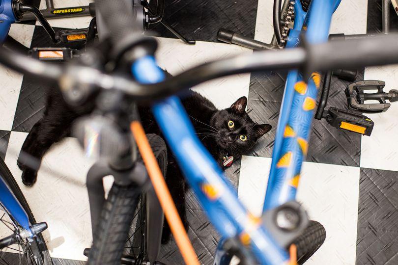 Spooky – On the Move Bike Shop