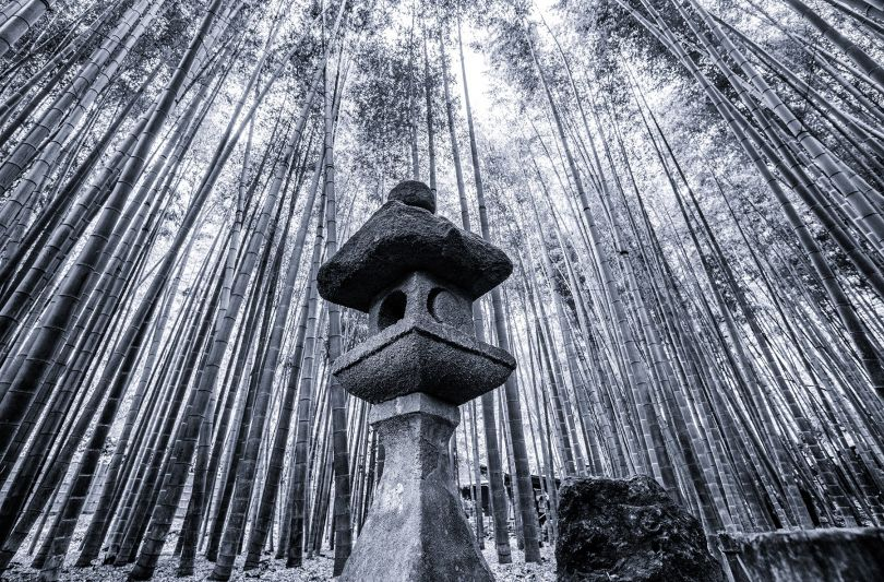 Bamboo Forest Fine Art Photography by Takeo Hirose. Winner in the Photography and Photo Manipulation Design Category, 2019-2020.
