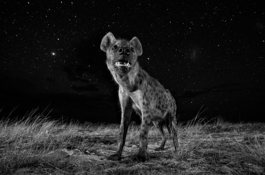 Copyright: © Will Burrard-Lucas, United Kingdom, 1st Place, Professional, Natural World, 2017 Sony World Photography Awards