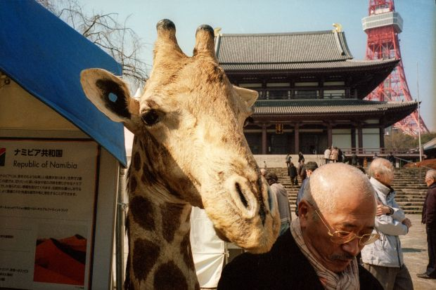 From the series and book, In Color In Japan © Shin Noguchi. All images courtesy of the artist.