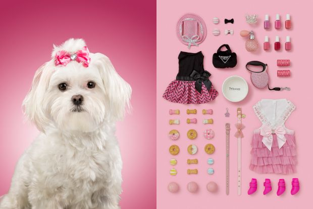 Lola Rose, is a white Maltese Shih Tzu mix. She is very spoiled dog that has her own Instagram profile and she's very much treated as the princess of the house. All images courtesy of the artist. Via Creative Boom submission.