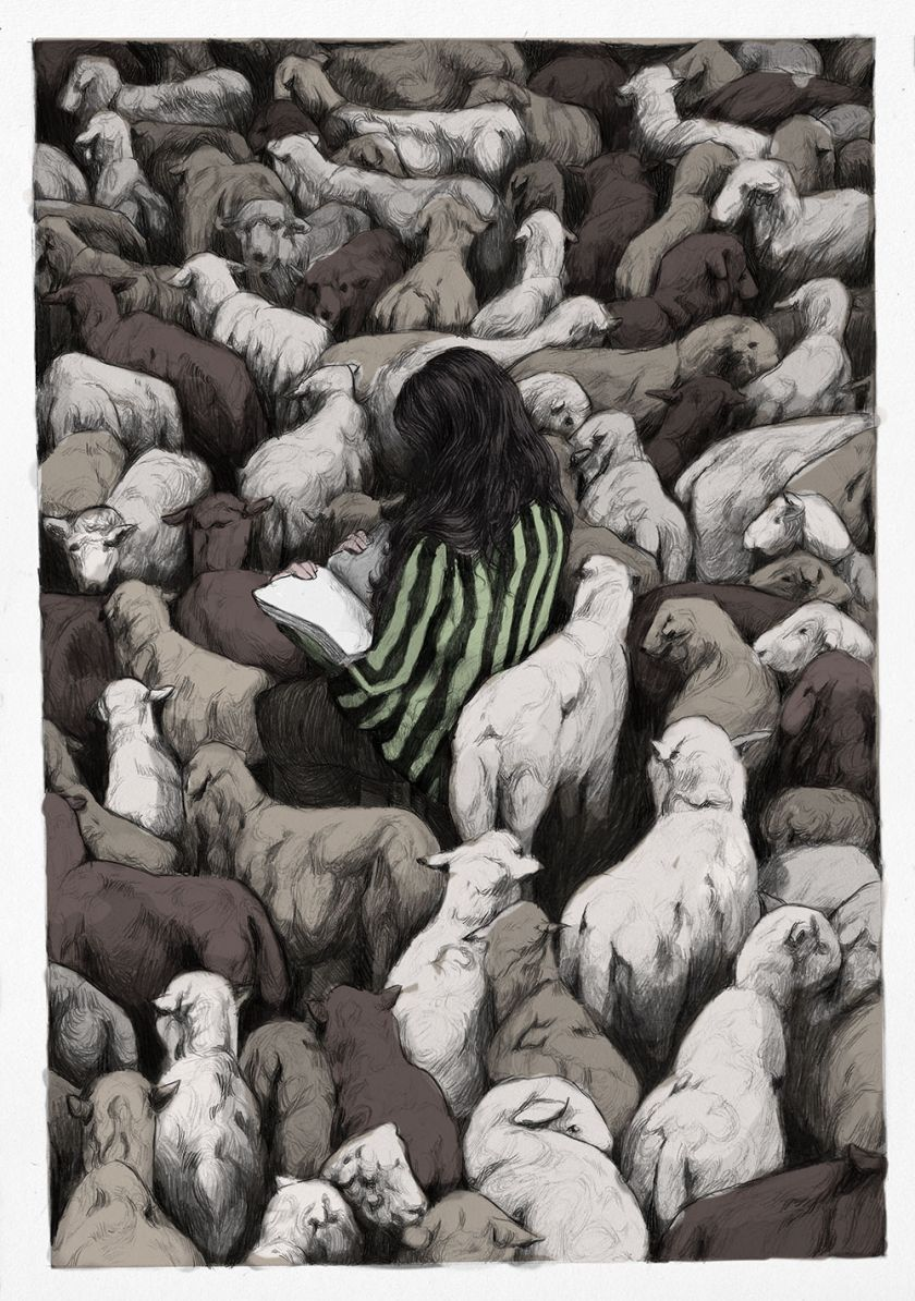 Wild Sheepchase © Julia Plath