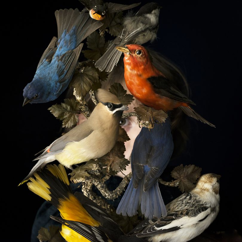 Birds of New England, Rockport, Maine, 2006 © Cig Harvey courtesy Beetles + Huxley Gallery