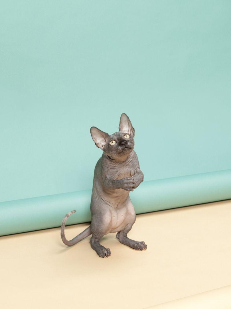 Animal Behaviour by Kimmo Metsaranta, Finland, Shortlist, Still Life, Professional Competition, 2015 Sony World Photography Awards