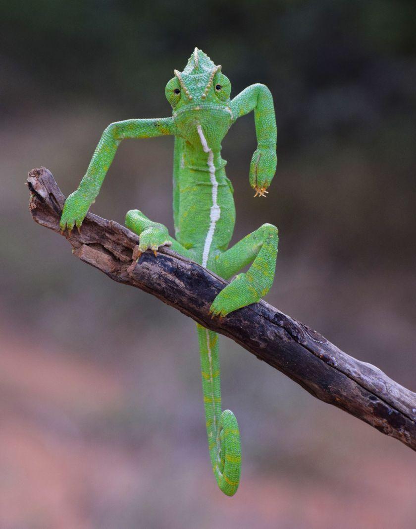 The Green Stylist © Gurumoorthy K