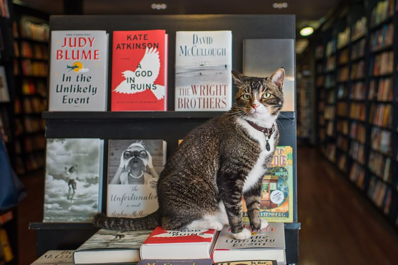 Tiny – Community Bookstore