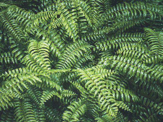 Courtesy of VTT Studio / [Adobe Stock](https://stock.adobe.com/uk/stock-photo/ferns-leaves-forest-outdoor-nature-abstract-background/109203203)