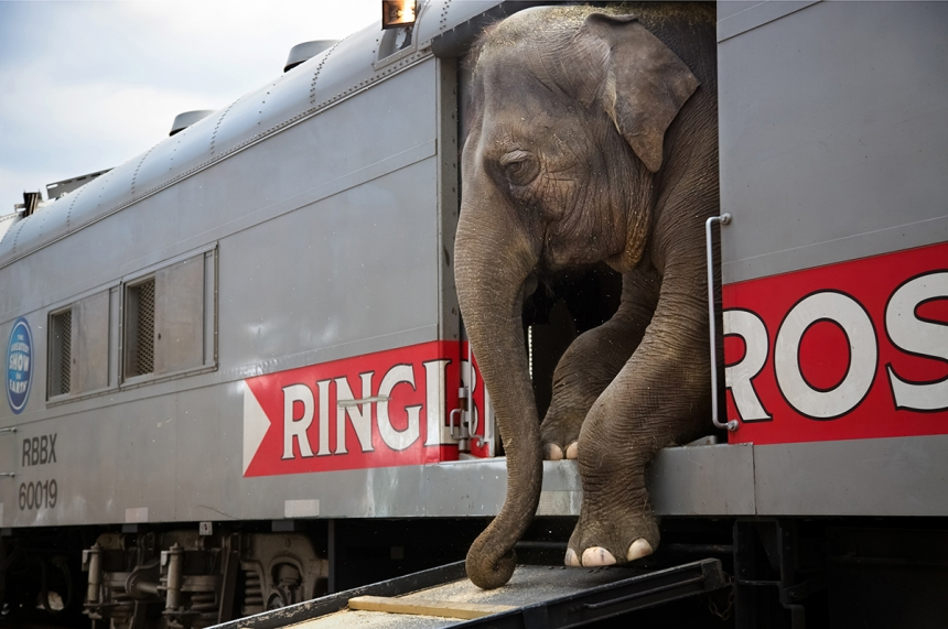 Running Away with the Circus - Stephanie Sinclair: There are more than 300 people that are with the Ringling Bros. and Barnum & Bailey circus blue unit, representing 25 different countries and speaking everything from Russian to Arabic to Guarani. (Professional Daily Life)