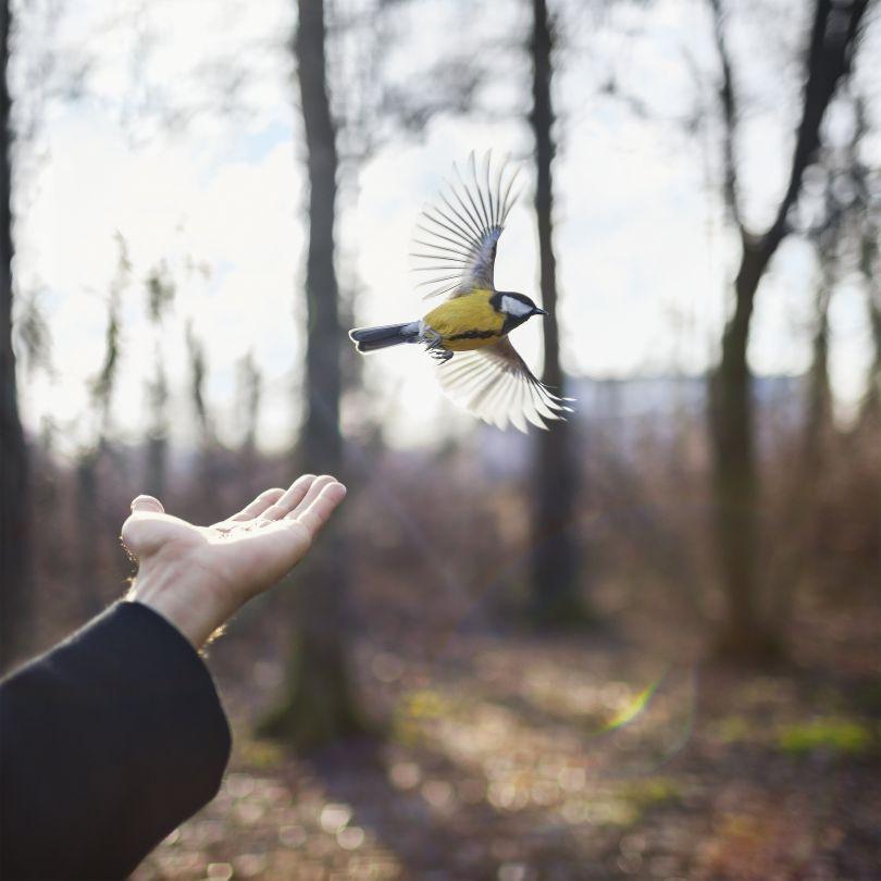 Goldfinch, St. Petersberg, Russia, 2014 © Cig Harvey courtesy Beetles + Huxley Gallery