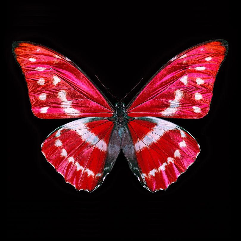Butterfly X © Heiko Hellwig, www.lumas.com