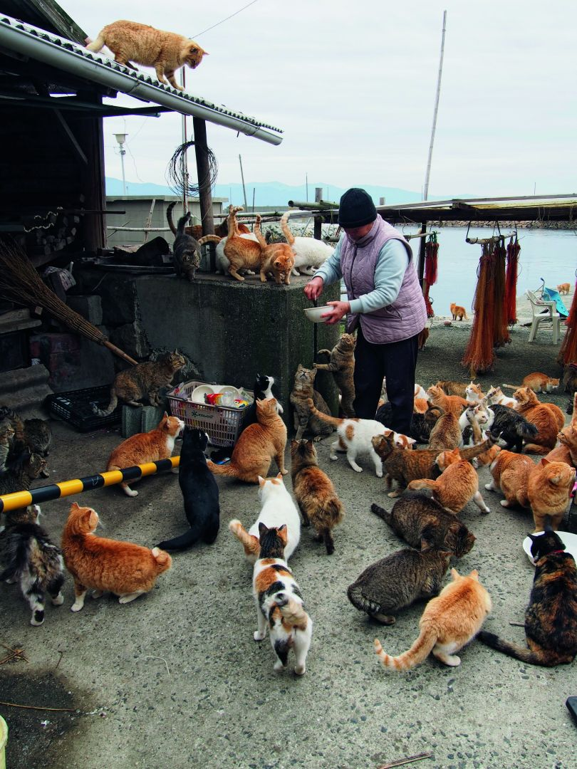 Local resident Naoko Kamimoto feeds the cats at Aoshima, a small, bucolic island off Ozu, in Ehime. In 1960, Aoshima had a population of 655, but now there are only 15 or so elderly residents. Photograph by Manami Okazaki