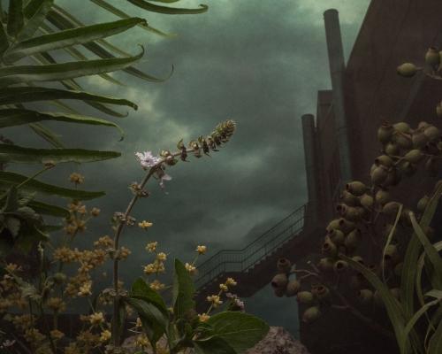 Fine Art Series - Daniel Shipp