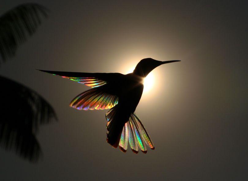 Rainbow Ballet © Christian Spencer