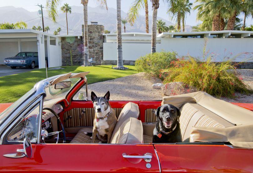 Lillian (L) and Rena, Australian Cattle Dog, Black Labrador Retriever, Rescues, Architect: Jack Meiselman, 1957, Car: 1963 Corvair © Nancy Baron