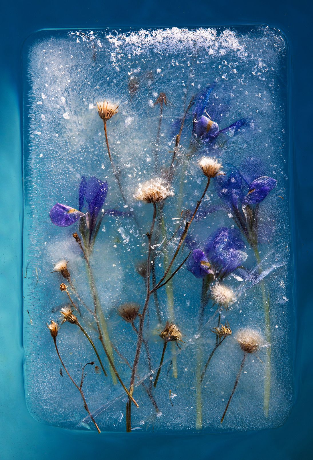 Romantic Photographs Of Frozen Flowers In Blocks Of Ice Capture The Fragility Of Nature Creative Boom