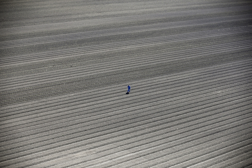 California Drought - Lucy Nicholson: A worker walks through farm fields in Los Banos, California, United States, May 5, 2015. California water regulators on Tuesday adopted the state's first rules for mandatory cutbacks in urban water use as the region's catastrophic drought enters its fourth year. (Professional Environment)