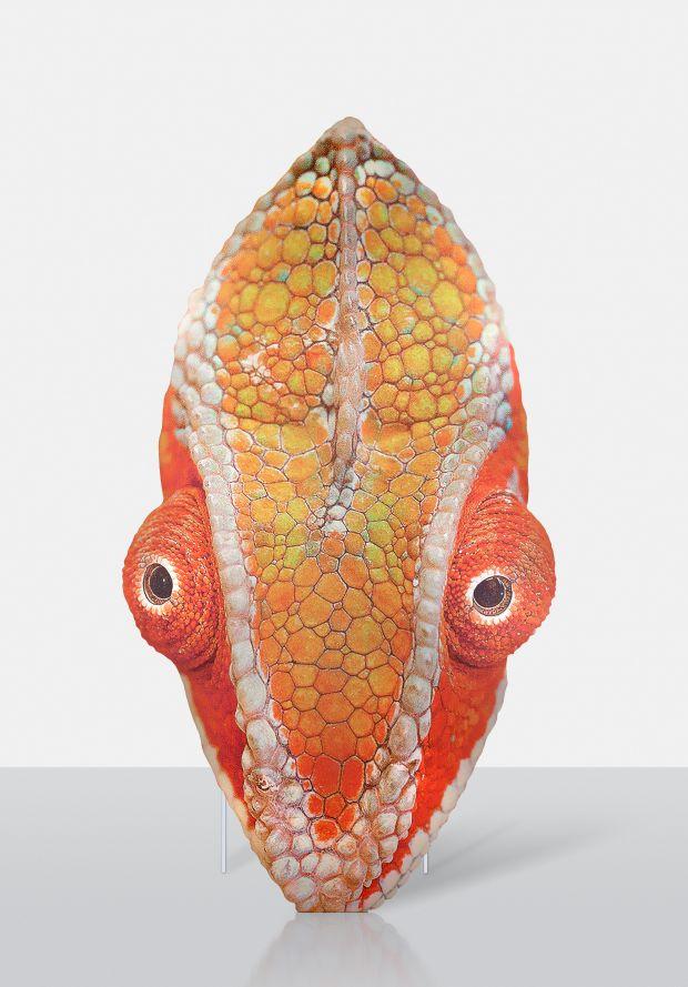 Katja Novitskova – Approximation (chameleon) 2017. Courtesy of Galerie Meyer Kainer, Vienna