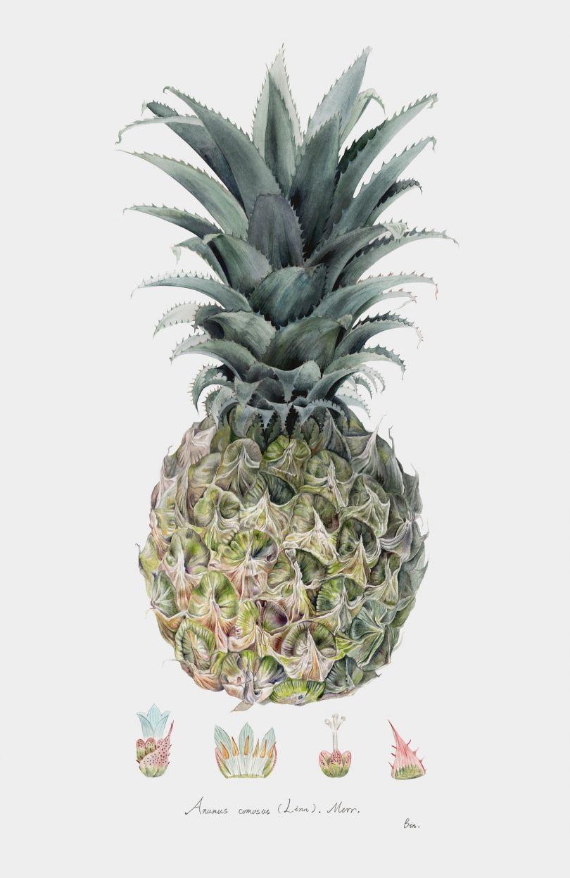 © Bin Qian: Pineapple