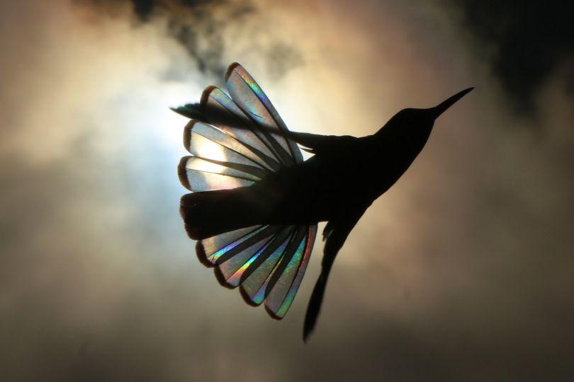 Cloud Angel © Christian Spencer