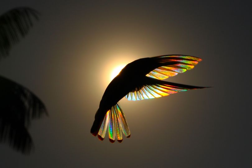 Winged Prism © Christian Spencer