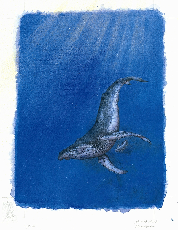 How the Whale Got His Throat from The Folio Society Limited Edition of Just So Stories by Rudyard Kipling © Niroot Puttapipat, 2012