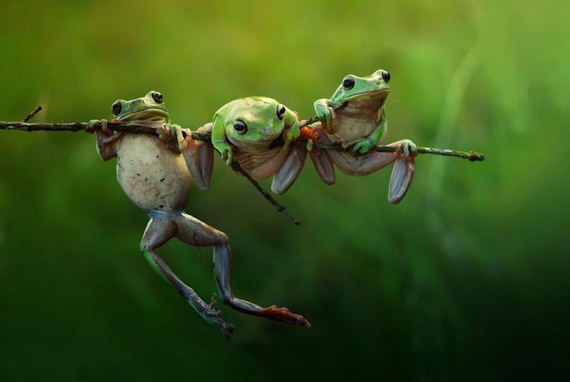 Frog Story by Harfian Herdi, Indonesia, Shortlist, Nature &Wildlife, Open, 2015 Sony World Photography Awards