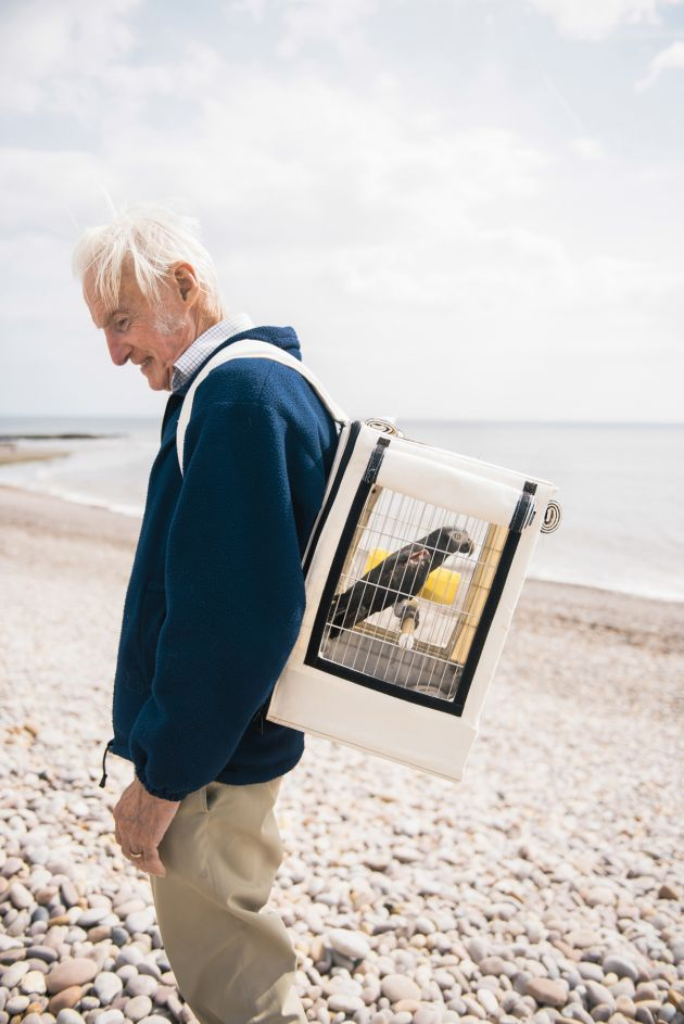 """Roy had an African grey parrot on his back when I saw him on a beach in Devon. He and his wife were on holiday with two of these birds, which they rescued, and their dog. As part of the rehabilitation process, the birds are taken out in cages, giving them access to the open sea air."" – Rehabilitating Roy's Parrot © Alexander Flemming"