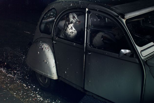 All images from The Silence of Dogs in Cars by Martin Usborne is published by Hoxton Mini Press