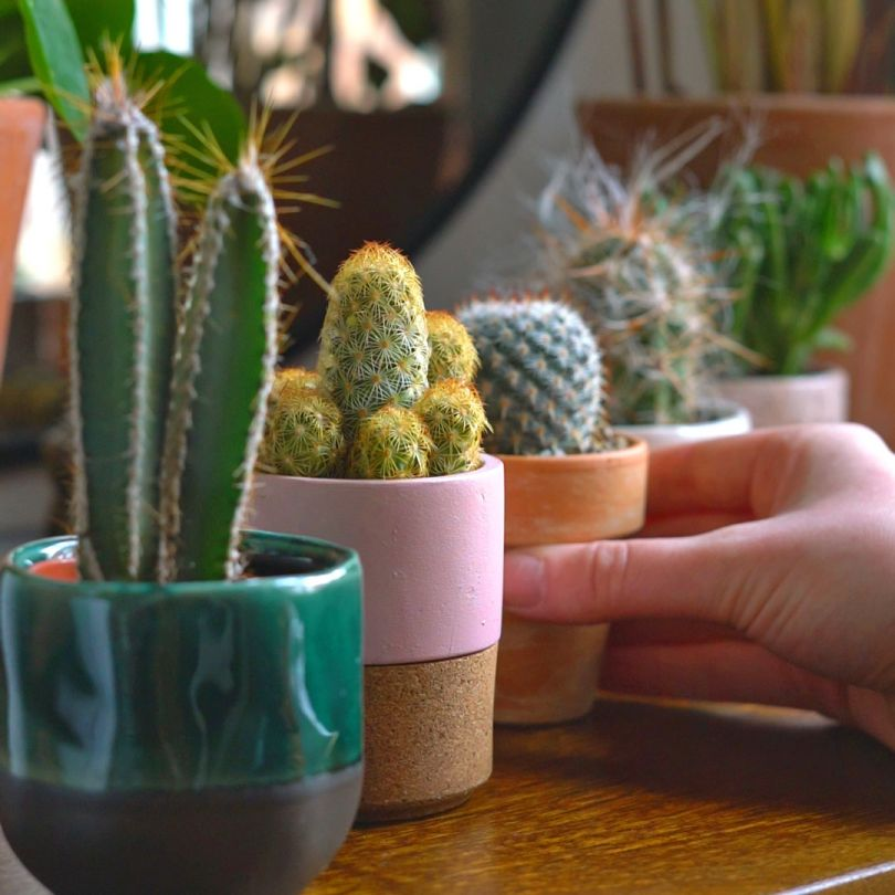 Barry's Cactus Club