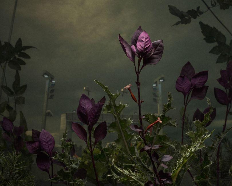 Established Supply Corridor. © Daniel Shipp. Fine Art Series Winner, Magnum and LensCulture Photography Awards 2017
