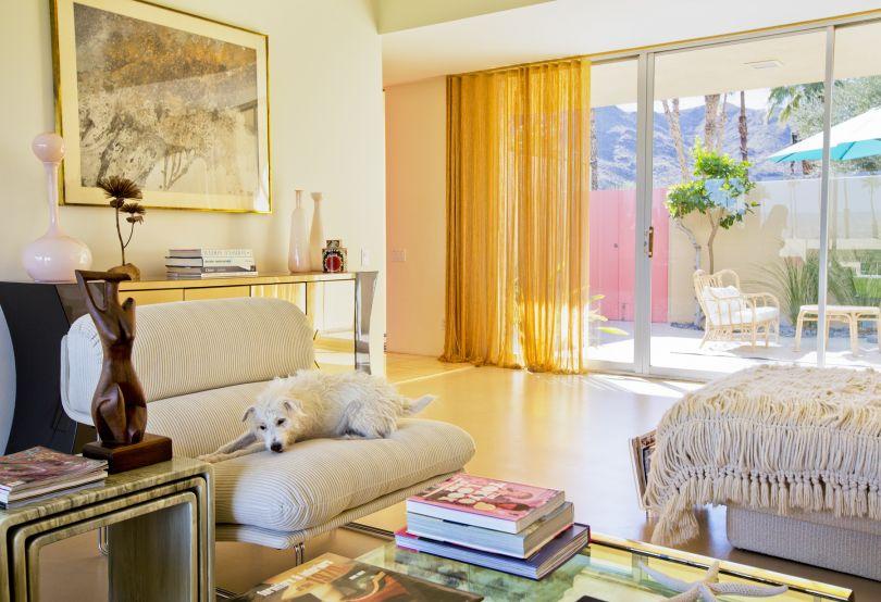 Rocky, Jack Russell Terrier, Architect: Richard Harrison 1966 © Nancy Baron