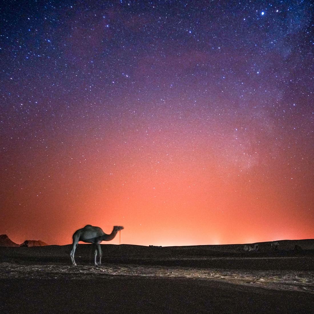 Camel Stars – © Louis Cole