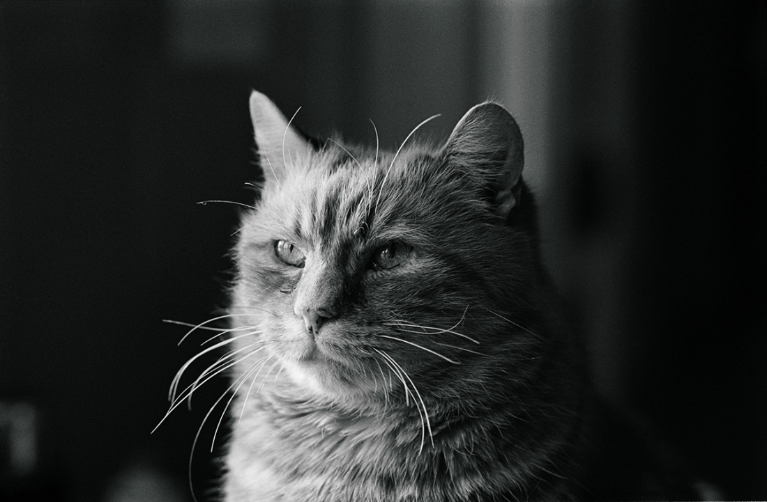 Jane Bown S Cats Charming Black White Photographs Of Our Feline Friends Creative Boom