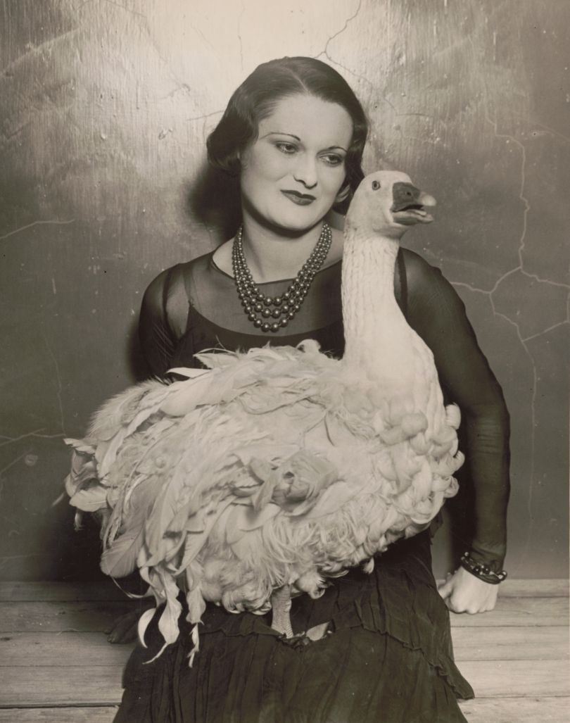 Not an Ostrich: 'Floradora goose' at 41st annual Poultry Show, Madison Square Garden, 1930. (From the Library of Congress, Prints & Photographs Division)