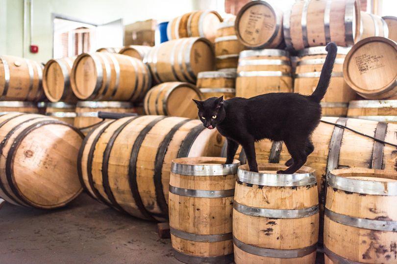 Jeffie – Kings County Distillery