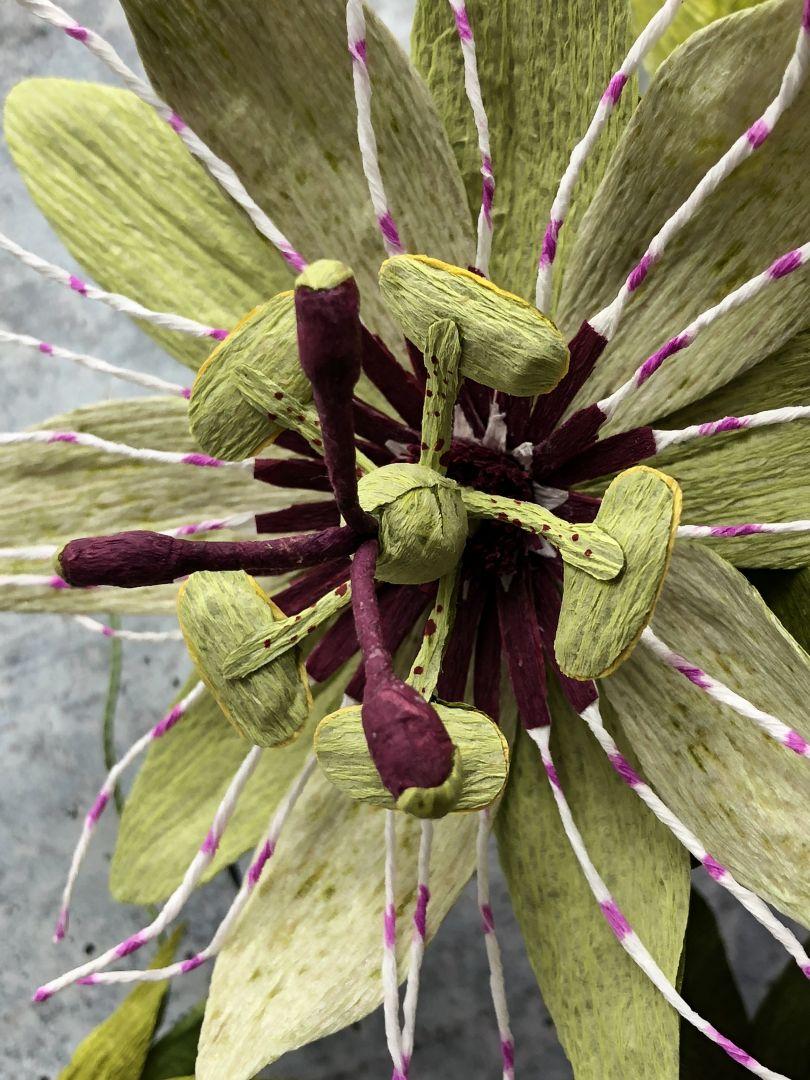 Passionflower Vine. Photo credit to Kelly Pastorek